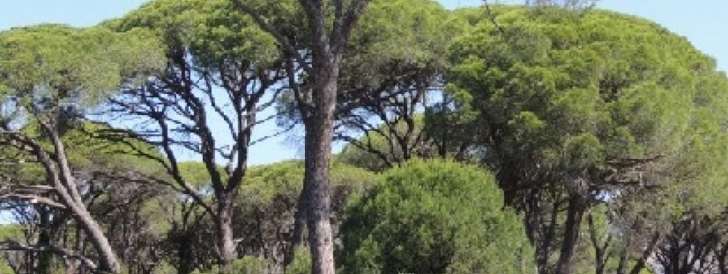 Wetland Kotichi - Strophilia in Achaia, in the Peloponnese