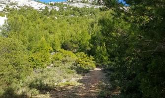 Flampouri Ridge in central Parnitha
