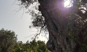 Fili - Giannoulas Stream - Theodoras Gorge - Fili Fortress