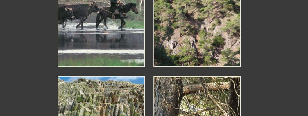 People, landscapes and birds of prey in the forest of Dadia