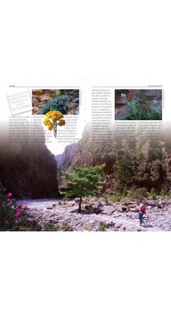 Samaria - The gorge and the White Mountains