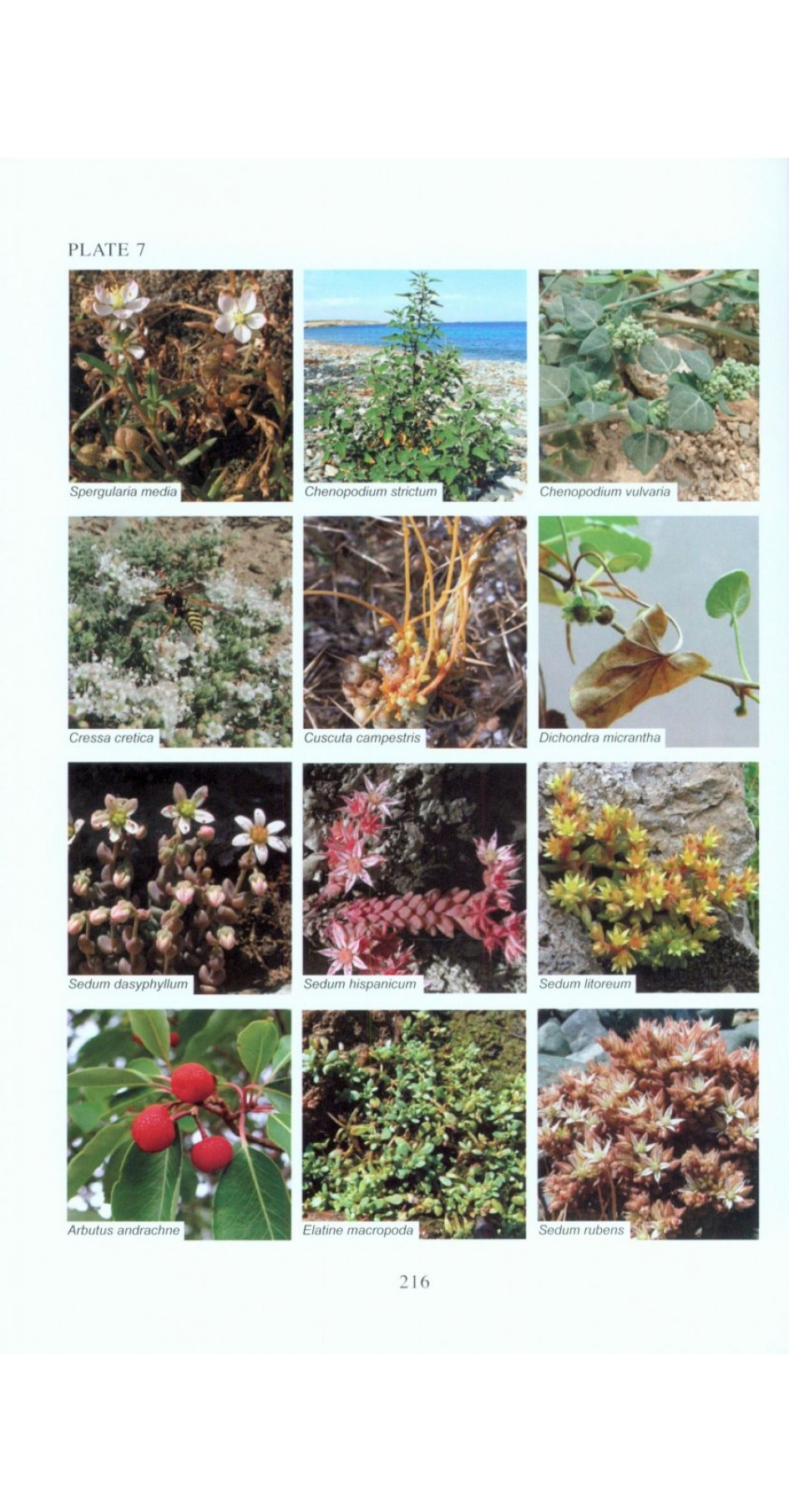 Flora of Samothraki